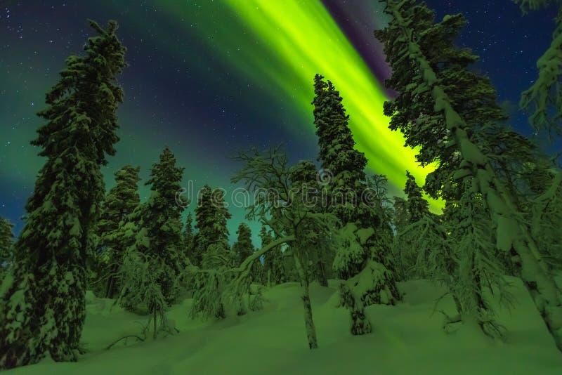 在结束拉普兰的北极光 免版税库存图片