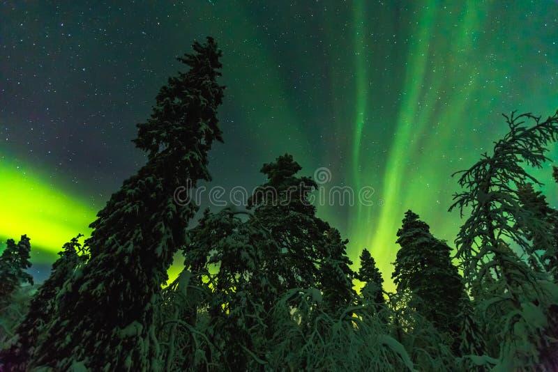 在结束拉普兰的北极光 图库摄影