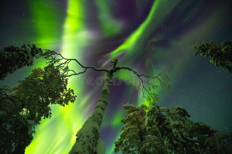 在结束拉普兰的北极光 免版税库存照片