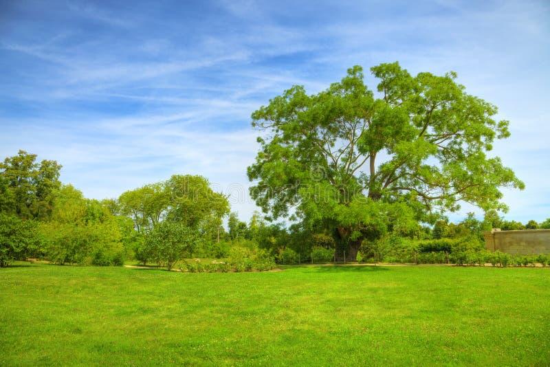 在结构树的百年草甸 库存照片