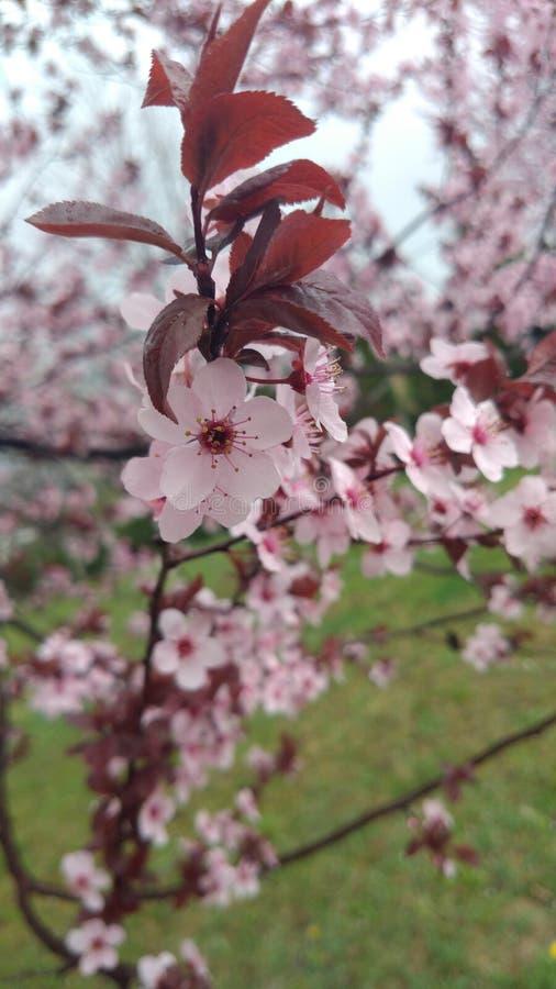 在结构树的花 免版税图库摄影