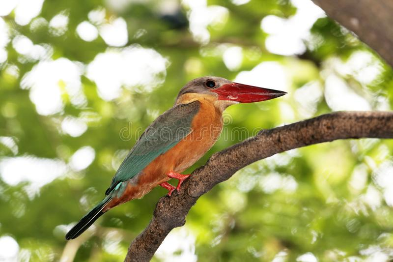 在结构树的鸟 免版税图库摄影