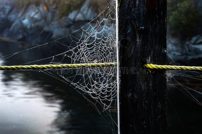 在绳索的满地露水的蜘蛛网 免版税图库摄影