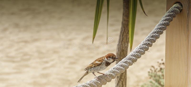 在绳索篱芭的一点鸟 库存照片