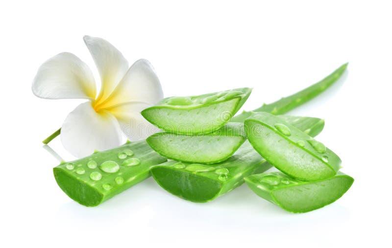 在维拉白色的芦荟新鲜的查出的叶子 在空白背景 免版税库存照片