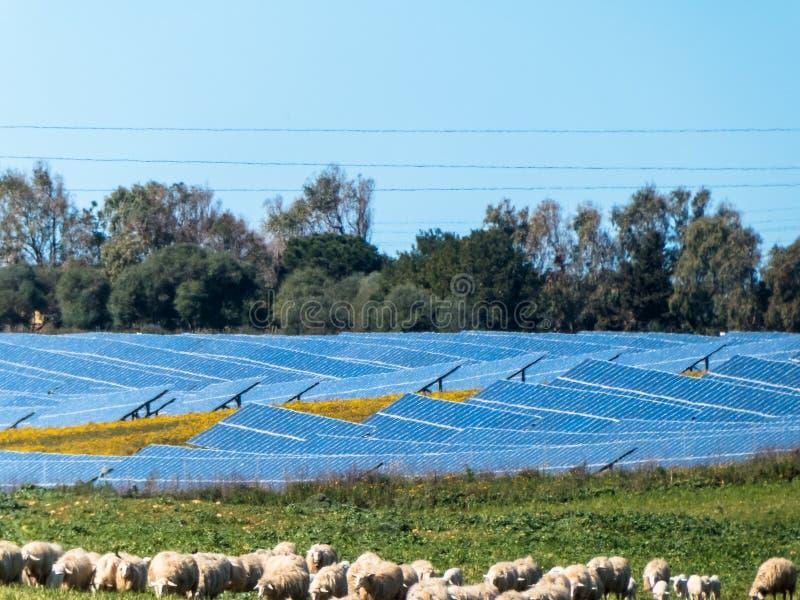 在绵羊牧场地附近的光致电压的盘区 免版税库存图片