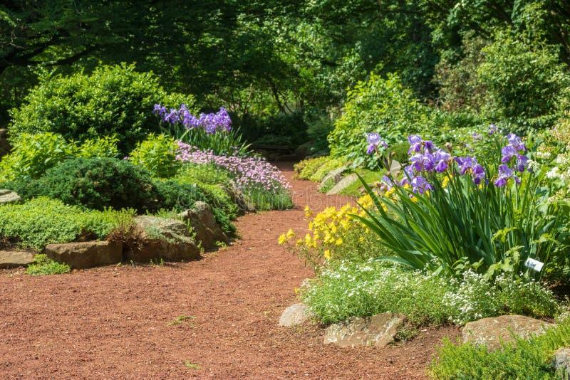 在绽放的多年生植物在一个假山花园在伊丽莎白停放 库存照片