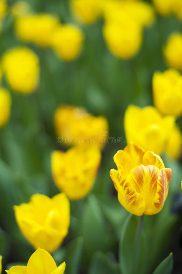 在绽放的春天秀丽 免版税库存图片