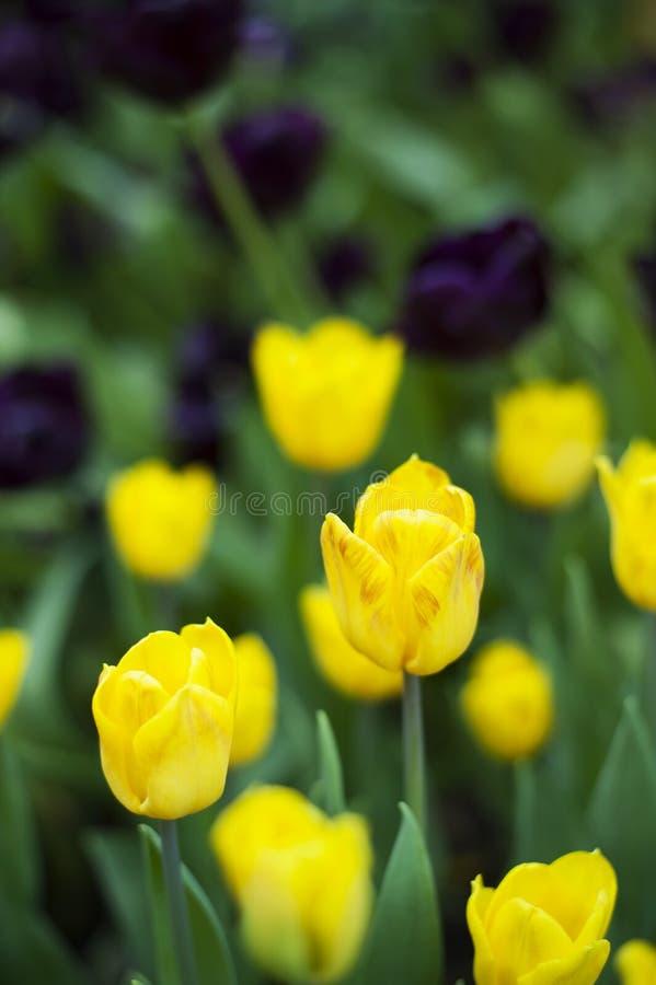 在绽放的春天秀丽 库存图片