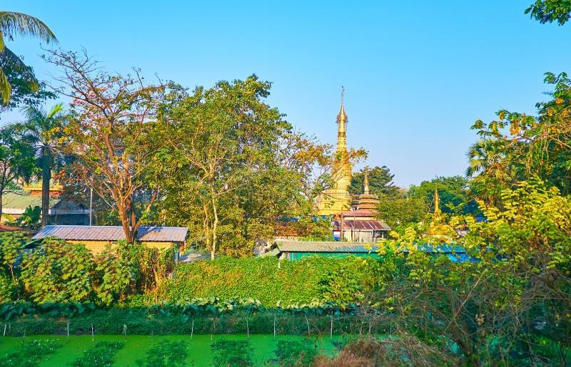 在绿叶后的金黄stupa,仰光,缅甸 免版税库存图片