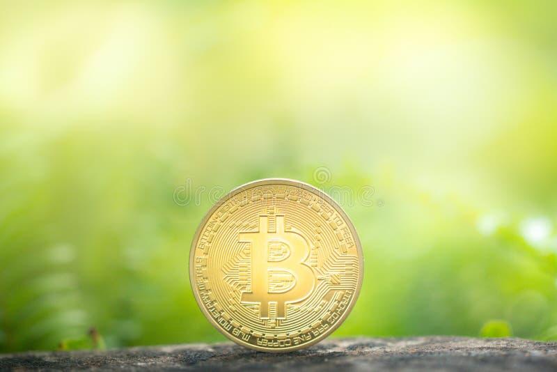 在绿叶背景的金黄bitcoin 库存照片