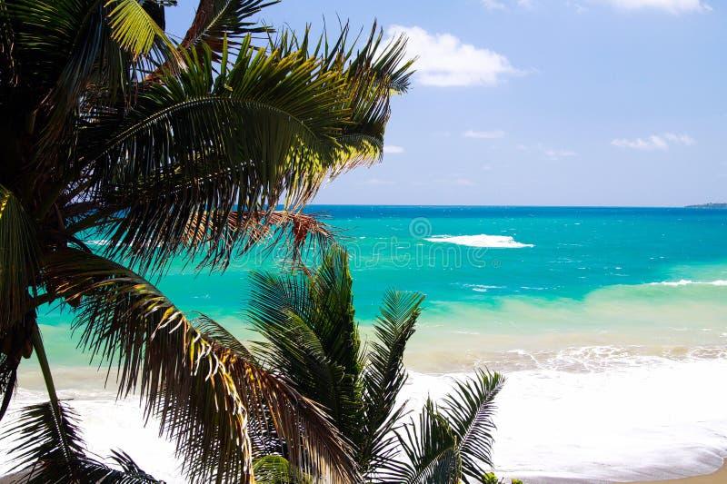 在绿松石海岸线的看法在有波浪破碎机和白色泡沫的在棕榈树之外,波特兰,牙买加蓝色盐水湖附近 免版税库存图片