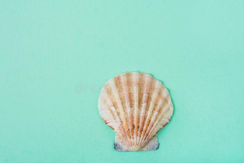 在绿松石背景的唯一半舱内甲板圈子海壳 最低纲领派现代样式 质朴的时髦颜色 背景看板卡问候页海报模板普遍性万维网 免版税库存照片