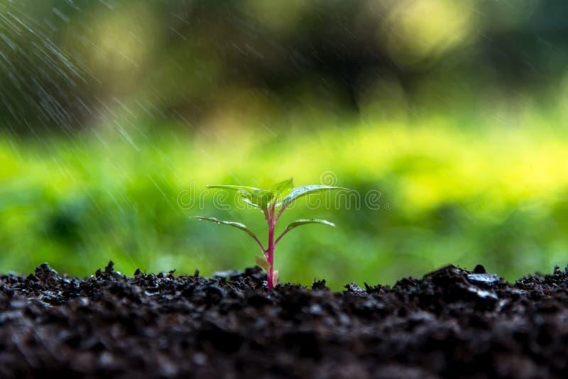 在绿色世界的新的生活 浇灌的年幼植物 免版税库存照片