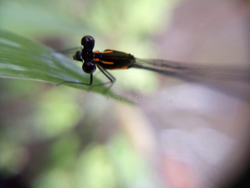 在绿色事假的一只蜻蜓 图库摄影