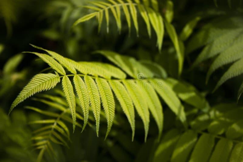 在绿色口气的自然美人 免版税图库摄影