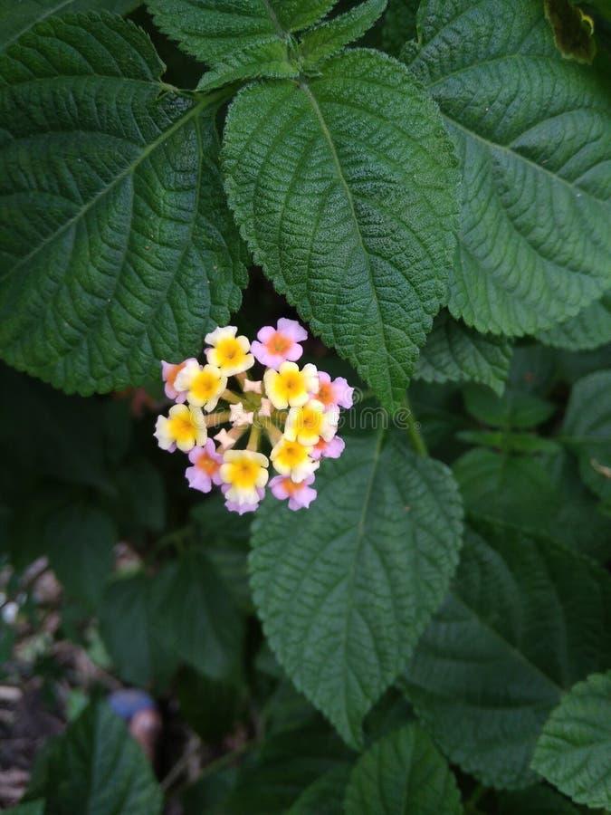 在绿色叶子之间的五颜六色的花 库存图片