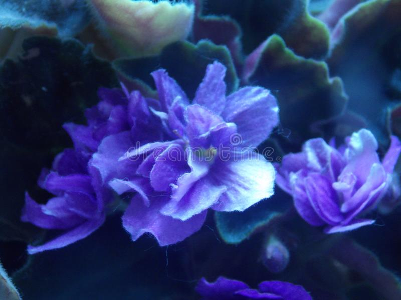 在绿色叶子浸没的青紫色花 图库摄影