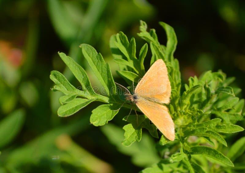 在绿色叶子的一只蝴蝶 图库摄影