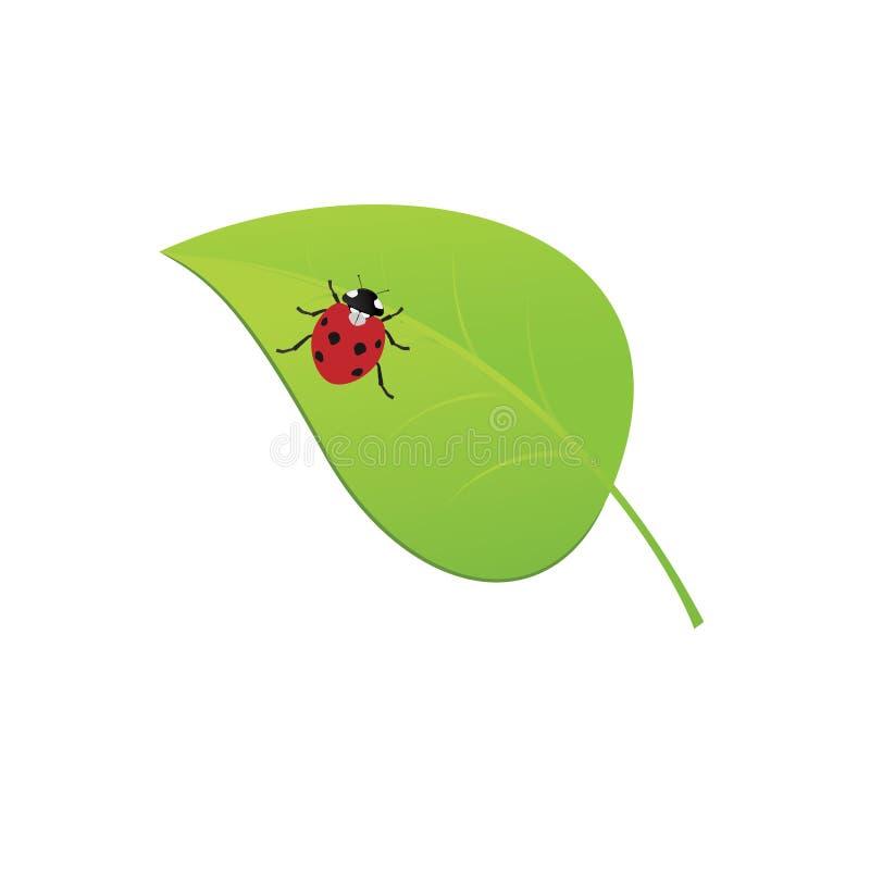 在绿色叶子的瓢虫环境设计的 也Rasterized版本可利用在画廊 库存例证