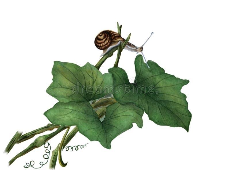 在绿色叶子的蜗牛 库存例证