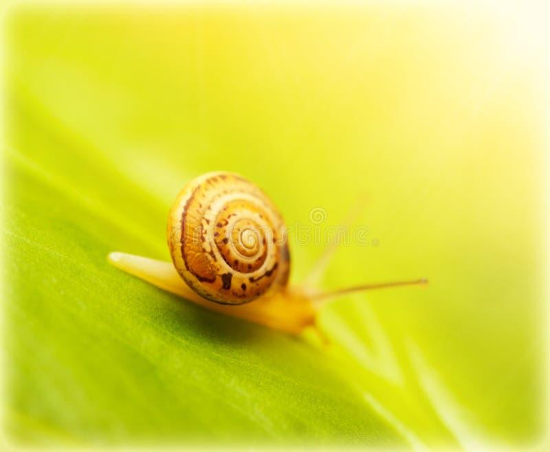 在绿色叶子的蜗牛 库存照片