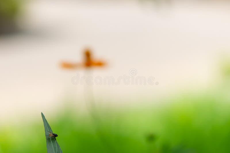 在绿色叶子的飞行 免版税库存图片