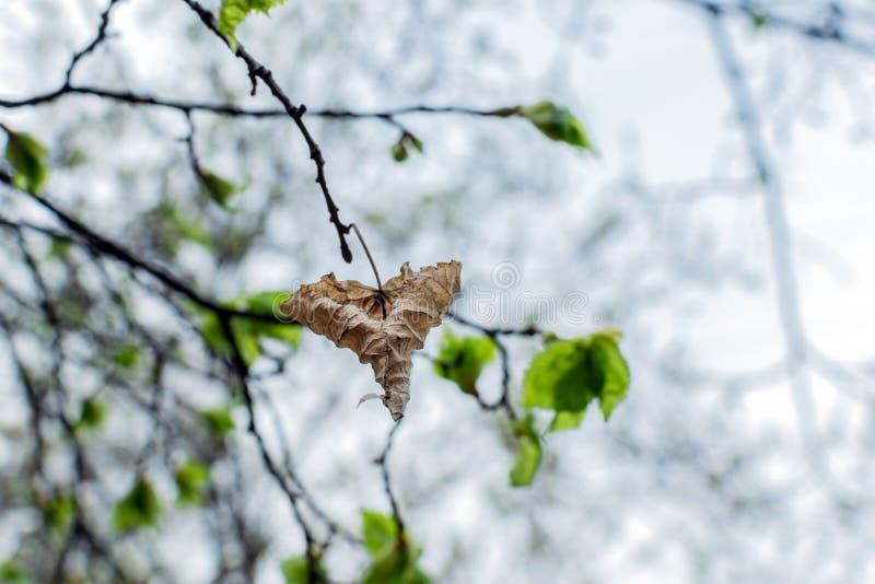 在绿色叶子背景的干秋天叶子特写镜头  库存照片