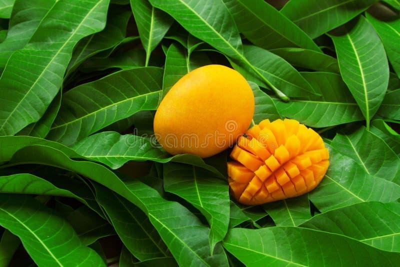 在绿色叶子背景的芒果热带水果 图库摄影
