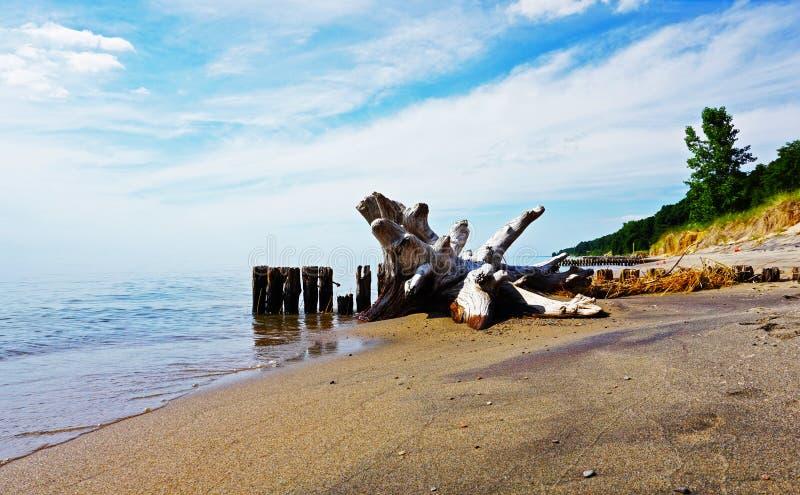 在绿色和桑迪岸, Michigan湖,美国的漂流木头 库存图片