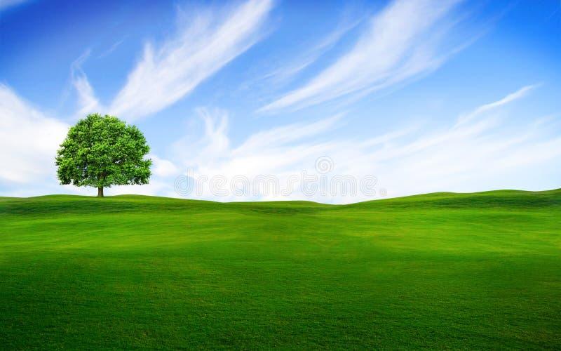 在绿色域的结构树 皇族释放例证