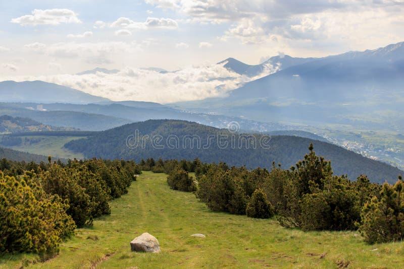 在绿色山的云杉的走廊与云彩在背景中 免版税图库摄影
