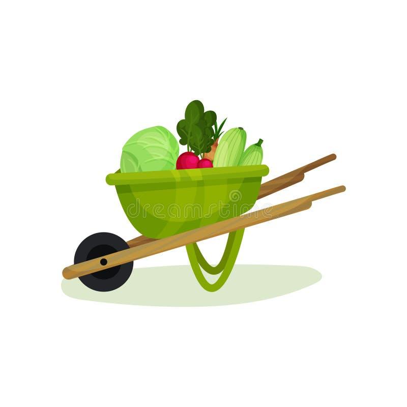 在绿色庭院推车的成熟和新鲜蔬菜 金属化有木把柄和一个轮子的独轮车 豆红萝卜花椰菜食物自然字符串蔬菜 平面 库存例证