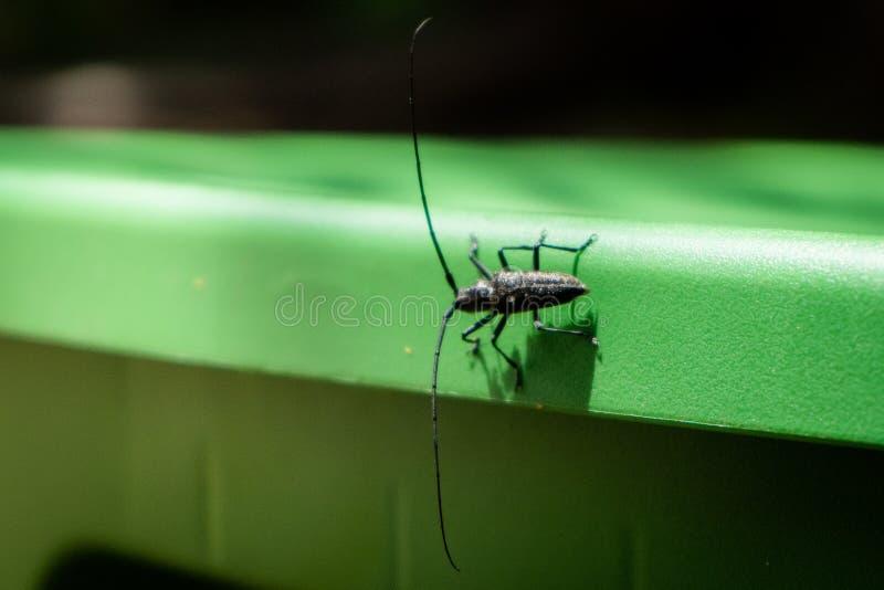 在绿色木盆的黑甲虫 免版税库存照片