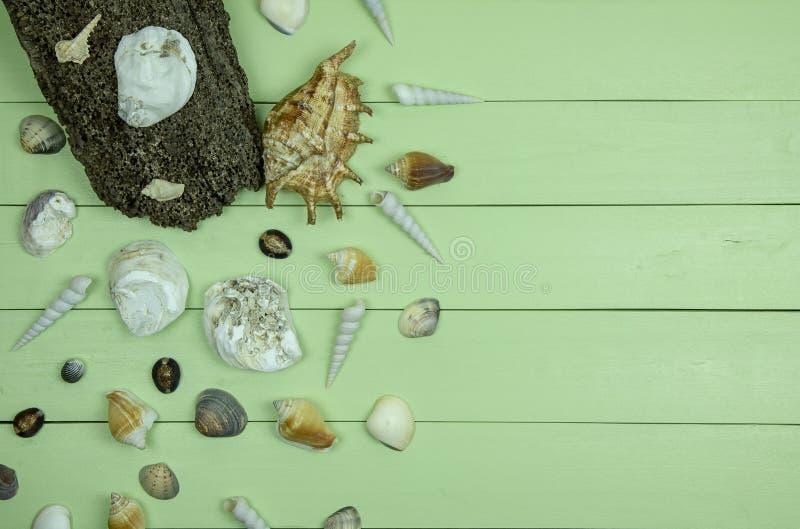 在绿色木背景的贝壳 免版税库存照片