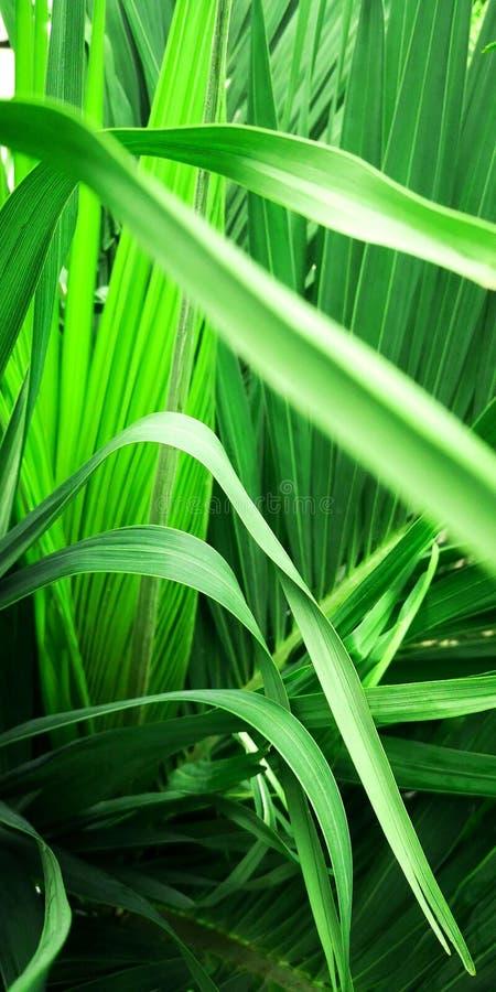 在绿色棕榈树叶子里面 免版税库存图片