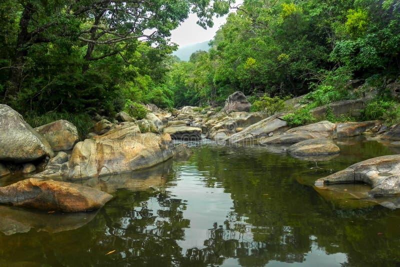 在绿色森林中的山河 免版税图库摄影