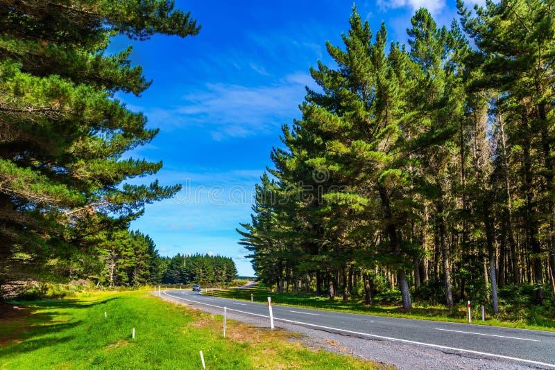 在绿色森林中的路 库存图片