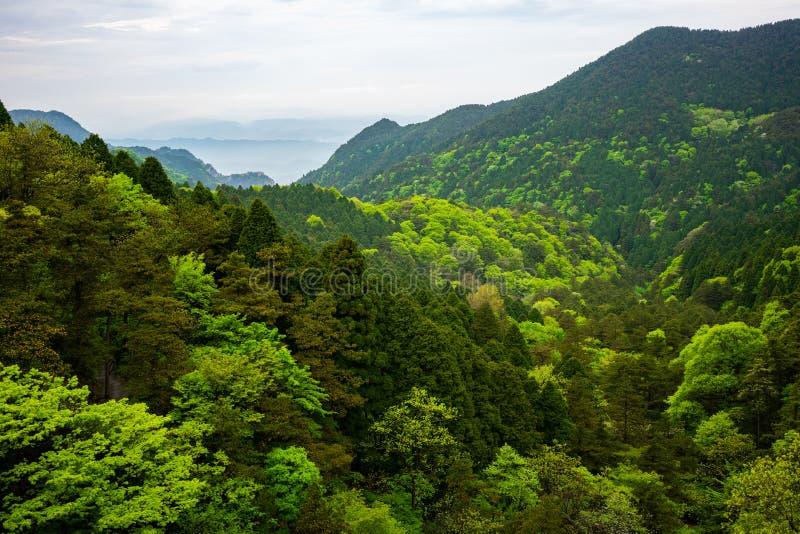 在绿色森林的看法有在庐山国家公园山江西中国的另外着色的 免版税库存照片