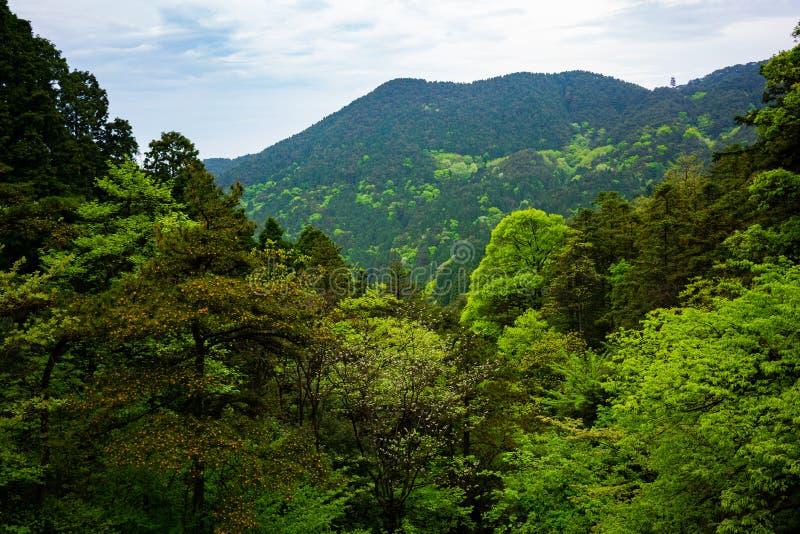 在绿色森林的看法有在庐山国家公园山江西中国的另外着色的 免版税库存图片