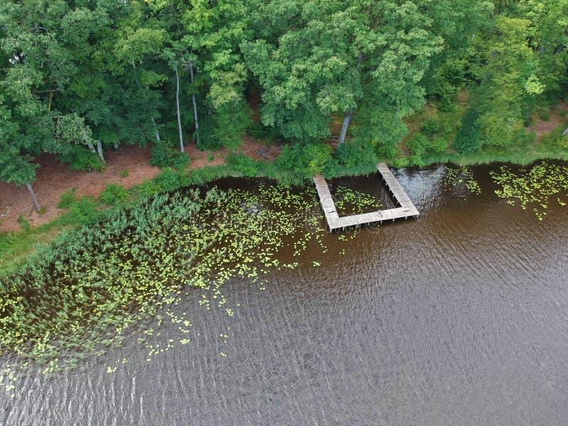 在绿色森林的鸟瞰图,湖和水生植物湖的开户与平台 库存图片