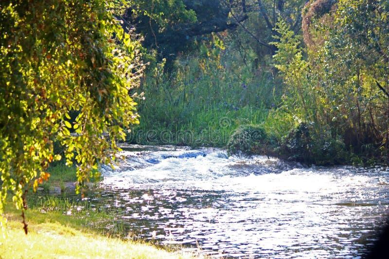 在绿色植被和快速流动的河的黄昏太阳 免版税库存图片