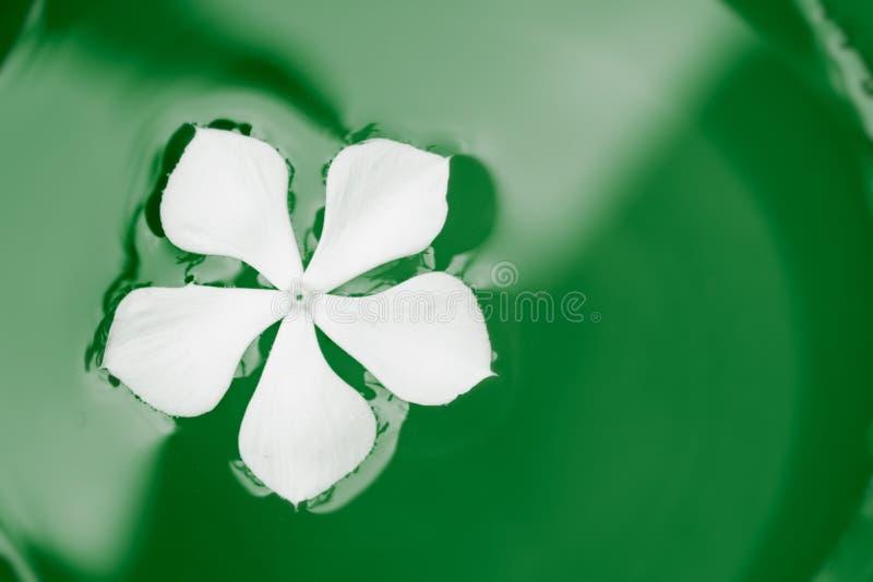 在绿色油漆的白花游泳 免版税图库摄影