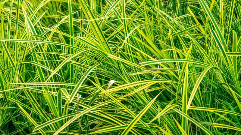 在绿色淡黄色草射击的特写镜头 库存图片
