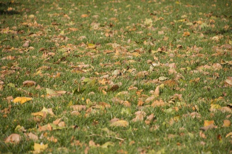 在绿色的叶子 免版税图库摄影