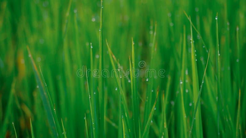 在绿色的模糊的露滴留下背景 免版税库存图片