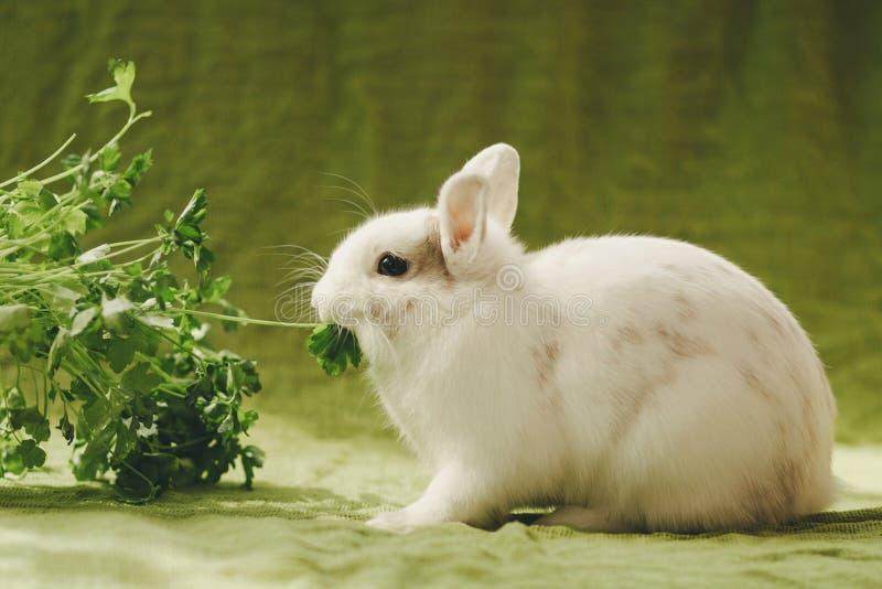 在绿色背景的白色兔子 免版税库存图片