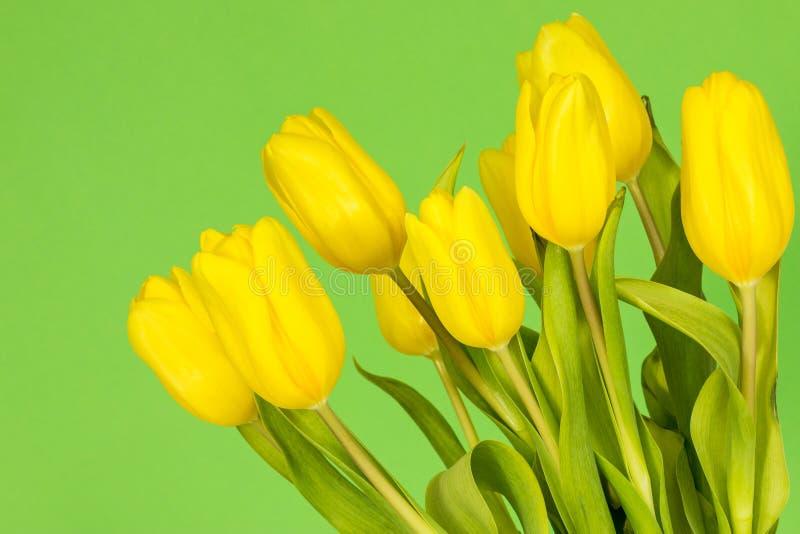 在绿色背景的郁金香 库存图片