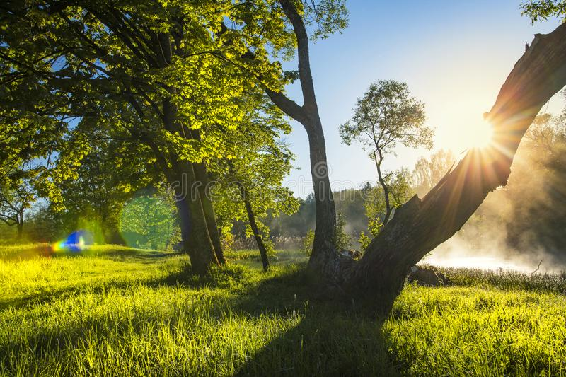 在绿色自然的完善的夏天风景与太阳背后照明通过树干在清楚的温暖的天 库存图片