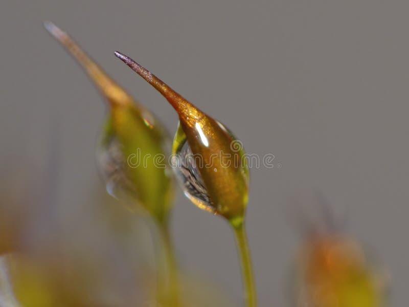 在绿色自然的新青苔和水下落从事园艺-宏观射击 图库摄影